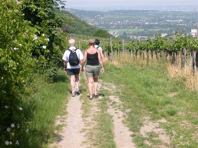 070525 (18) VIE Vineyard.JPG (96715 bytes)